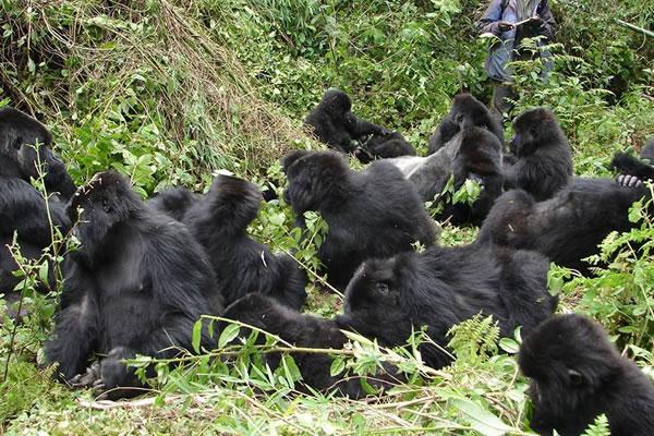 10 Day Bwindi Gorilla Trek
