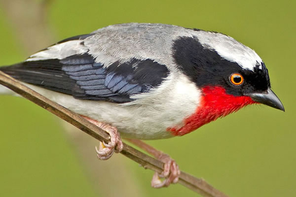 5 Day Bird Safari in Murchison